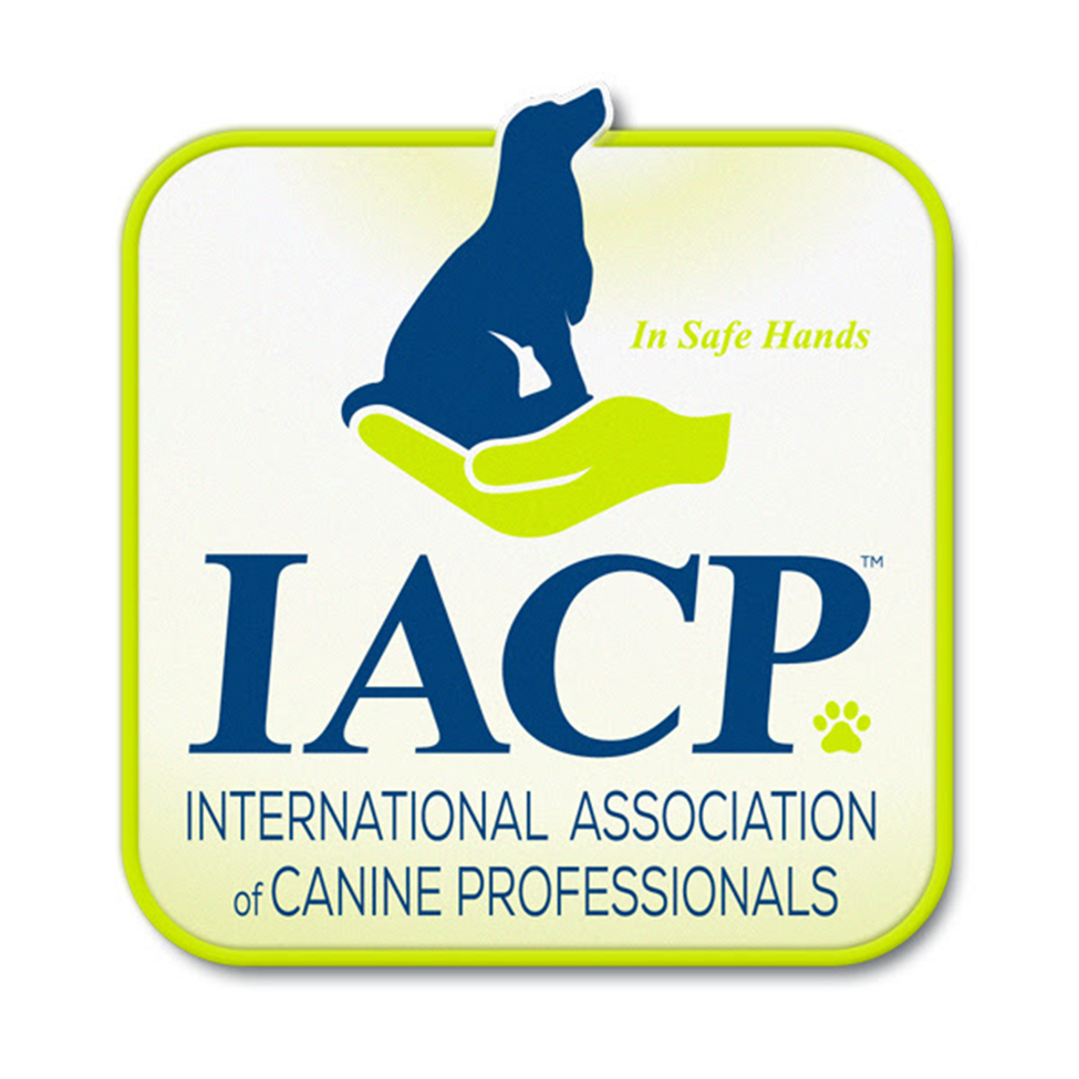 An organization established to maintain the highest standards of professional and business practice among canine professionals. Founded by a small group of dedicated dog trainers the IACP has become the Association and network that brings together professionals from every corner of the dog world. The aim, to continually develop and provide the best of dog care to the public and their canine companions.